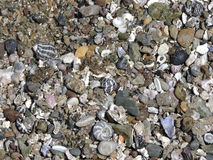Beach shells and pebbles Royalty Free Stock Image