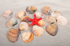 Beach with shells and red starfish Stock Images
