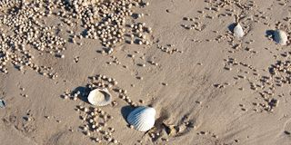 Beach Shells and Sand Balls. Frazer Island - West Coast Royalty Free Stock Photo