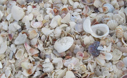 Beach Shells Stock Photo