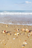 Beach with shells Stock Photos