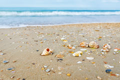 Beach with shells Stock Photography