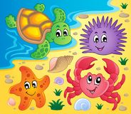 Beach with shells and sea animals 3. Vector illustration Stock Photos