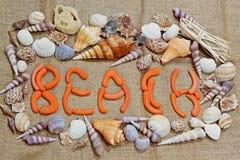 Beach shells Royalty Free Stock Image
