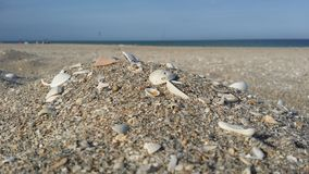 Beach Shells. Sea shell on the beach ocean Background Royalty Free Stock Photography