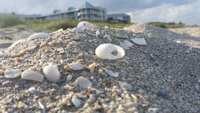 Beach Shells. Sea shell on the beach ocean Background Stock Images