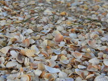 Beach of shells Royalty Free Stock Photos