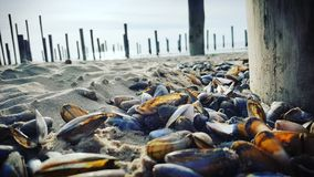 Beach shells wather sand Holland blue. Beach Holland Sand Royalty Free Stock Image