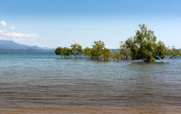 Beach shore in Port Douglas Stock Image