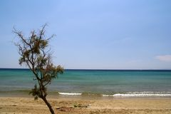 Beach and Shrub. An empty beach with a little lonely hectic tree on Tinos island, Greece Stock Photo