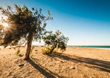 Beach on the Sicily Stock Photo