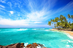Beach Side Sri Lanka With Coconut Trees Royalty Free Stock Images
