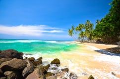 Beach Side Sri Lanka With Coconut Trees Royalty Free Stock Photos