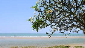 Beach side tree. Royalty Free Stock Image