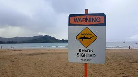 Beach sign warning of sharks. A sign on a beach with a warning of shark sighting royalty free stock image