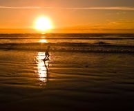 Beach Silhouettes at Sunset 3. With the sun setting, a young people are playing at the beach on the Oregon Coast Royalty Free Stock Photo