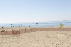 Beach with a single tree stock photo
