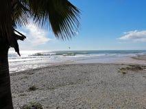 Palm tree at the beach royalty free stock photo