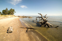 Beach skyline with old tree trunks in water Stock Images