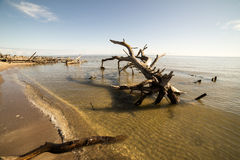 Beach skyline with old tree trunks in water Royalty Free Stock Photos