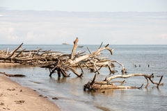 Beach skyline with old tree trunks in water Stock Photos
