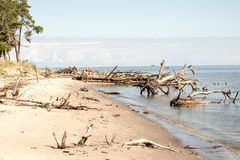 Beach skyline with old tree trunks in water Royalty Free Stock Photo