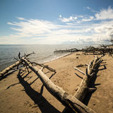 Beach skyline with old tree trunks in water Stock Photo