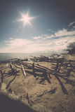 Beach skyline with old tree trunks in water Royalty Free Stock Image
