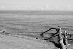 Beach skyline with old tree trunks in water - monochrome Stock Photography