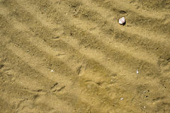 Beach with small shell Stock Image