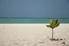 Beach with small tree and the sea Royalty Free Stock Image