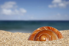 Beach Snail. Close up of conch on sandy beach with sky background Royalty Free Stock Photos