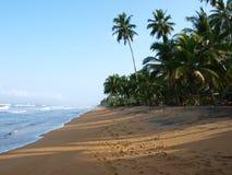 Beach in Sri Lanka. Beautiful beach in Sri Lanka close to Wadduwa Royalty Free Stock Image