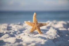 Beach and Starfish Stock Photo