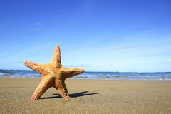 Beach and Starfish Royalty Free Stock Photography