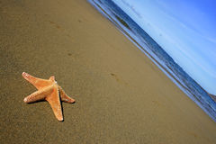 Beach with Starfish Stock Image