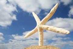 Beach Starfish royalty free stock images