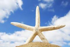 Beach Starfish royalty free stock photo