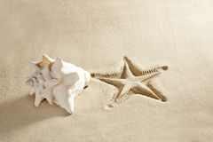 Beach starfish print  shell white caribbean sand Stock Photo