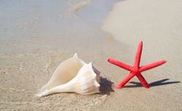 Beach starfish and seashell on white sand Stock Images