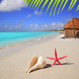 Beach starfish and seashell on white sand Royalty Free Stock Photo