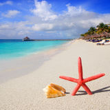 Beach starfish and seashell on white sand Royalty Free Stock Image
