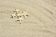 Beach with starfishes Stock Photos