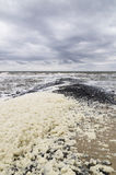 Beach with stone pier and foam caused by heavy storm Stock Photos