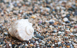 Beach stones Stock Photos