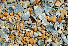Beach stones and shell background Royalty Free Stock Photos