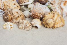 Beach summer background – seashells and sea stars on the sand, copy space for text stock photo