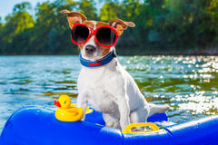 Beach summer dog Royalty Free Stock Photography