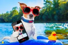 Beach summer dog selfie stock images