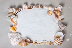 Beach, summer, sea shells. Royalty Free Stock Photography